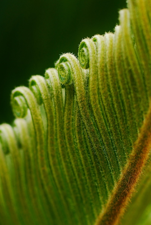 Sago Palm... | LENS MODEL NOT SET <br> Click image for more details, Click <b>X</b> on top right of image to close
