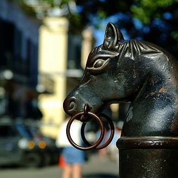 Royal Street Horse, The French Quarters... | NIKON 24-85MM F/3.5-4.5G ED-IF AF-S <br> Click image for more details, Click <b>X</b> on top right of image to close