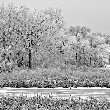 Monochrome morning | NIKON 18-200MM F/3.5-5.6G ED-IF AF-S VR DX <br> Click image for more details, Click <b>X</b> on top right of image to close