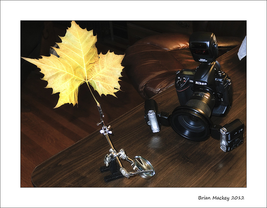 How I shot the leafs | LENS MODEL NOT SET <br> Click image for more details, Click <b>X</b> on top right of image to close