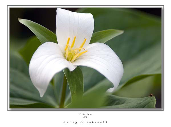 Trillium 2 | LENS MODEL NOT SET <br> Click image for more details, Click <b>X</b> on top right of image to close