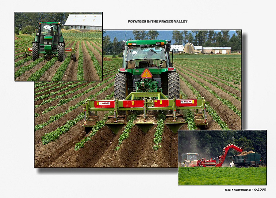 Potato Farming In BC | LENS MODEL NOT SET <br> Click image for more details, Click <b>X</b> on top right of image to close