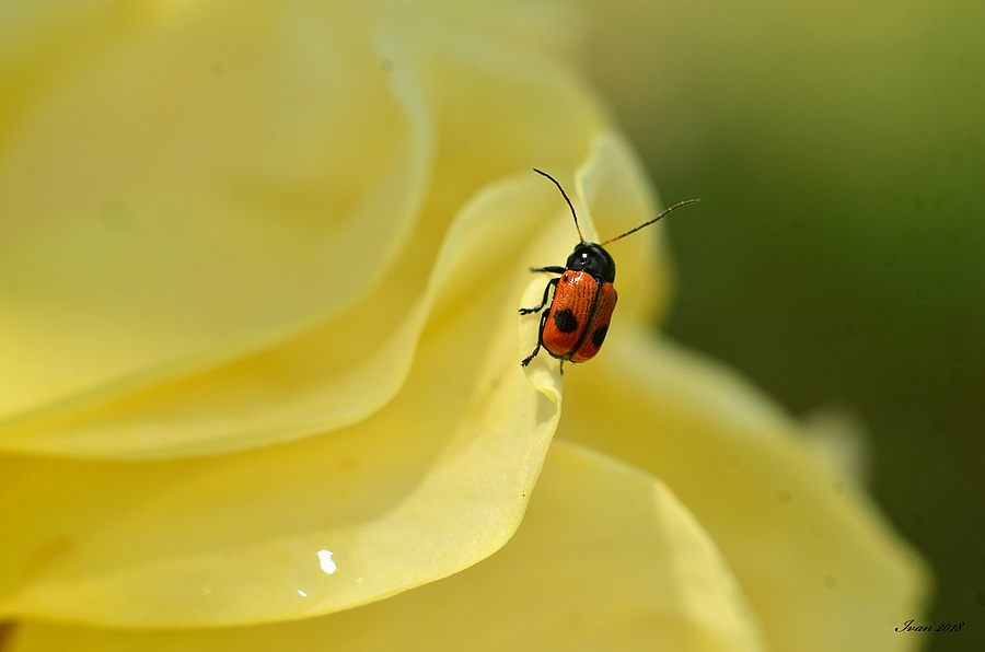 Bug's life | NIKON 50MM F/1.8D AF <br> Click image for more details, Click <b>X</b> on top right of image to close