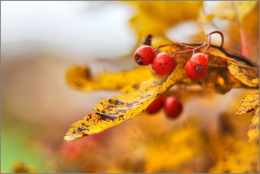 Change In Season | NIKON 50MM F/1.8D AF <br> Click image for more details, Click <b>X</b> on top right of image to close