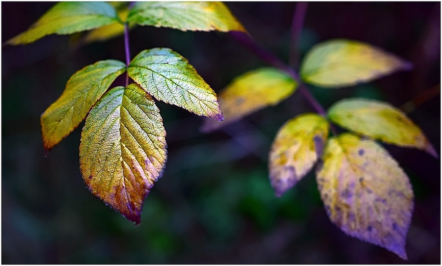 nikonimages.com gallery | Autumn Foilage | SIGMA Art 18-35mm f/1.8 DC | NIKON D5300