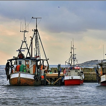Photo: Traditional Shrimp Boats In Norway