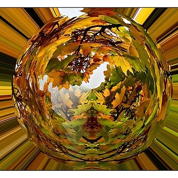 Autumn Polar Coordinates | NIKON 16-85MM F/3.5-5.6G ED AF-S VR DX <br> Click image for more details, Click <b>X</b> on top right of image to close