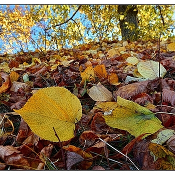 Foliage in Decay | NIKON 14-24MM F/2.8G ED AF-S N <br> Click image for more details, Click <b>X</b> on top right of image to close