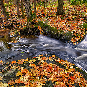 Photo: Fall