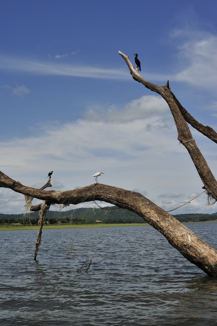 Kabini river | NIKON 50MM F/1.4D AF <br> Click image for more details, Click <b>X</b> on top right of image to close
