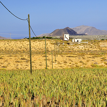 Fuerte Ventura Aloe Vera plantation | NIKON 18-105MM F/3.5-5.6G ED-IF AF-S VR DX <br> Click image for more details, Click <b>X</b> on top right of image to close