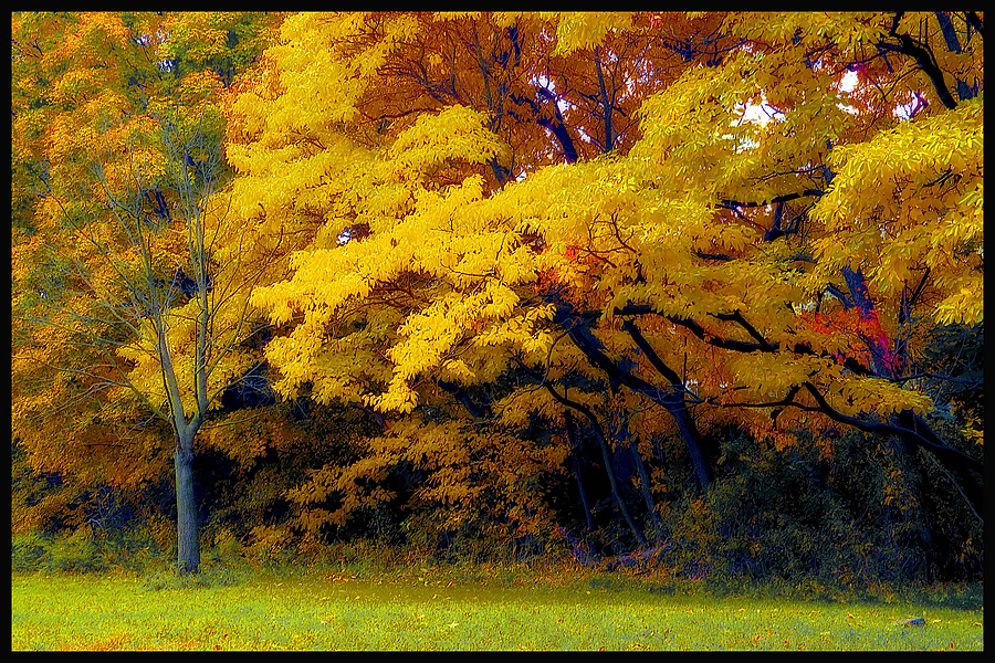 Fall IN Pelham Bay Park | NIKON 24-120MM F/4G ED VR <br> Click image for more details, Click <b>X</b> on top right of image to close