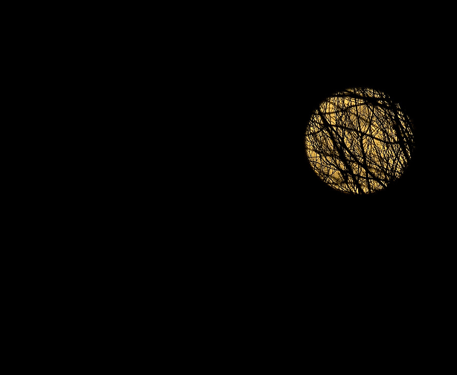 Super Moon Through the Trees 2 | SIGMA 50-500MM F4.5-6.3 DG OS HSM <br> Click image for more details, Click <b>X</b> on top right of image to close