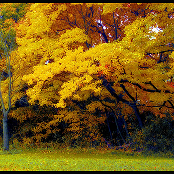 Fall IN Pelham Bay Park