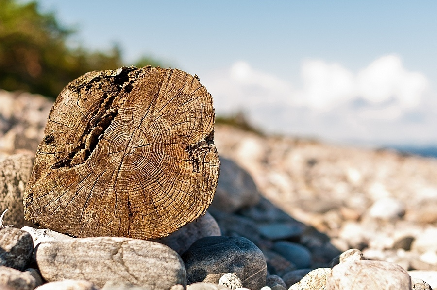 Beached Log | NIKON 50MM F/1.4 AF <br> Click image for more details, Click <b>X</b> on top right of image to close