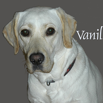 Tribute to Vanille