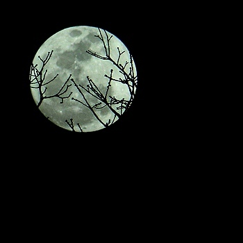 Moon with Branches | LENS MODEL NOT SET <br> Click image for more details, Click <b>X</b> on top right of image to close