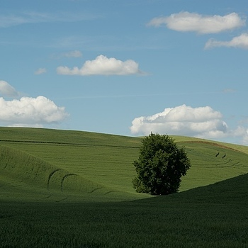 THE PALOUSE,WA 2013 | LENS MODEL NOT SET <br> Click image for more details, Click <b>X</b> on top right of image to close