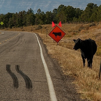 ROAD COW,UT | LENS MODEL NOT SET