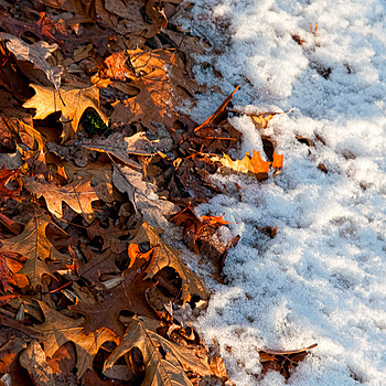 Fall to Winter | SIGMA 24-70 F2.8 <br> Click image for more details, Click <b>X</b> on top right of image to close