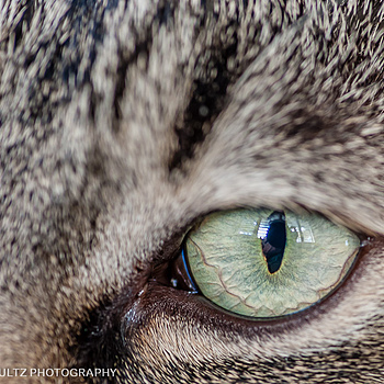 Cats Eye | TOKINA 100MM F2.8 MACRO <br> Click image for more details, Click <b>X</b> on top right of image to close