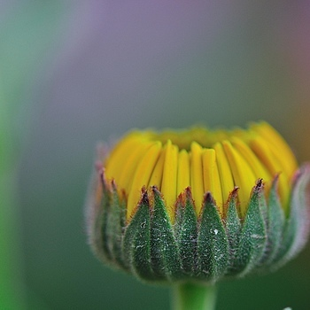 Photo - 10486 | NIKON 105MM F/2.8 MICRO <br> Click image for more details, Click <b>X</b> on top right of image to close
