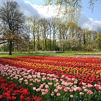 Parc De Keukenhof (Hollande) | TAMRON 18-270MM F/3.5-6.3 <br> Click image for more details, Click <b>X</b> on top right of image to close