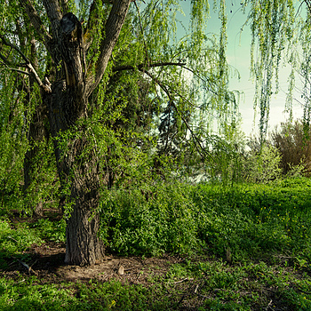 Dreaming Green | TOKINA 12-24MM F4 <br> Click image for more details, Click <b>X</b> on top right of image to close