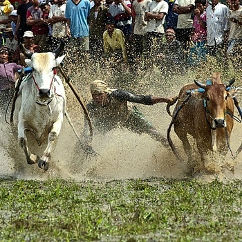 Bull Racing | NIKON 70-200MM F/2.8G ED AF-S VR II <br> Click image for more details, Click <b>X</b> on top right of image to close