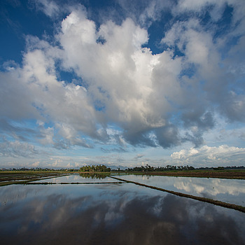 Blue Sky @ Paddy Field | NIKON 14MM F/2.8D ED AF <br> Click image for more details, Click <b>X</b> on top right of image to close