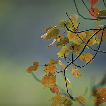 Micro leaf peeping | NIKON 600MM F/4D ED-IF AF-S II <br> Click image for more details, Click <b>X</b> on top right of image to close