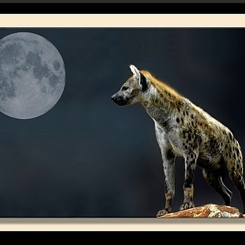 Hyena by Night | NIKON 18-200MM F/3.5-5.6G ED-IF AF-S VR DX