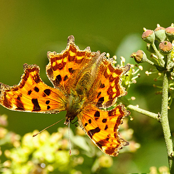 Comma | NIKON 300MM F/2.8G ED-IF AF-S VR N <br> Click image for more details, Click <b>X</b> on top right of image to close