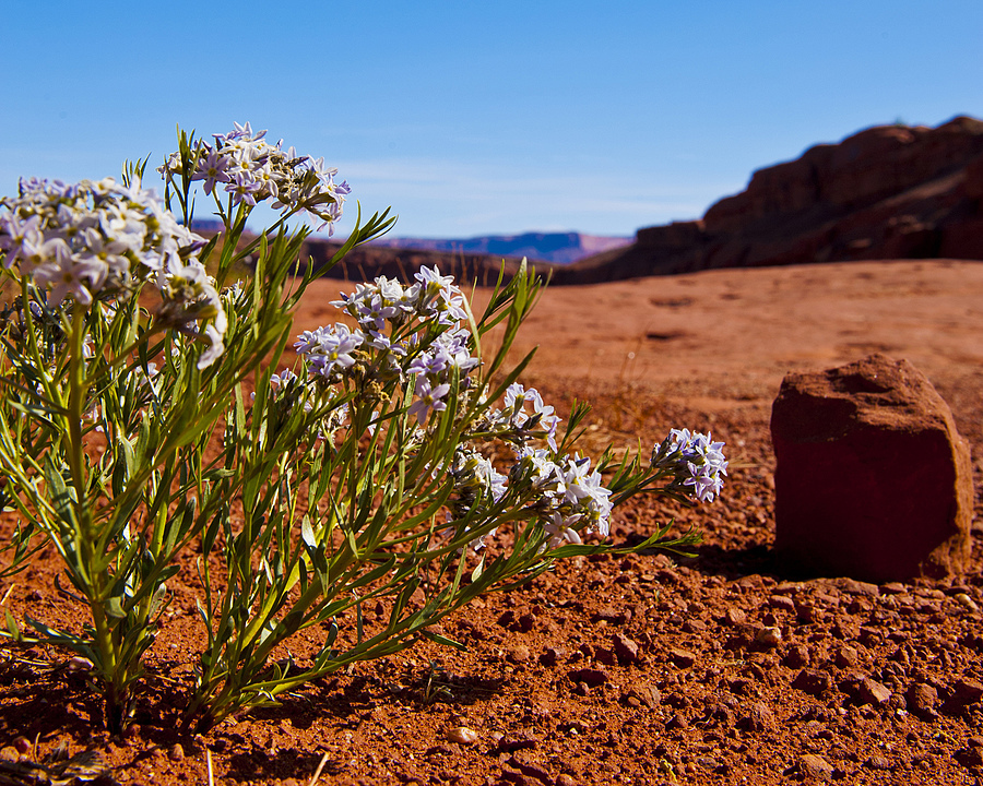 Desert Flowers | LENS MODEL NOT SET <br> Click image for more details, Click <b>X</b> on top right of image to close