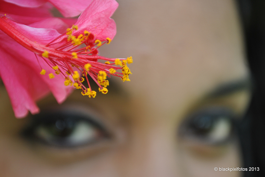 Hibiscus Eyes | LENS MODEL NOT SET <br> Click image for more details, Click <b>X</b> on top right of image to close