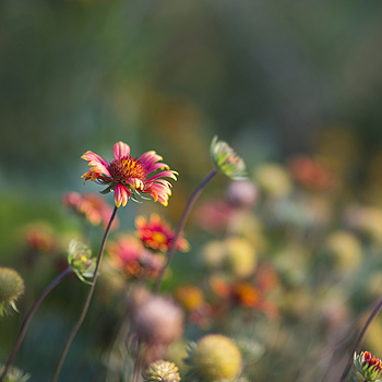 Late Summer Color | NIKON 85MM F/1.4G  AF-S N  <br> Click image for more details, Click <b>X</b> on top right of image to close