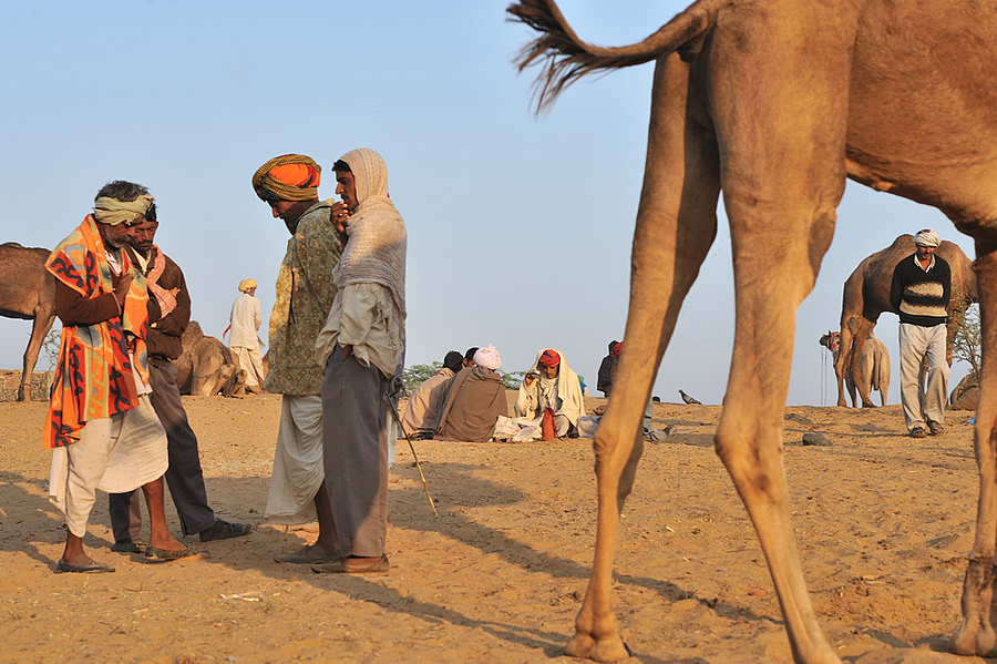 pushkar camel fair | NIKON 24MM F/1.4G ED AF-S <br> Click image for more details, Click <b>X</b> on top right of image to close