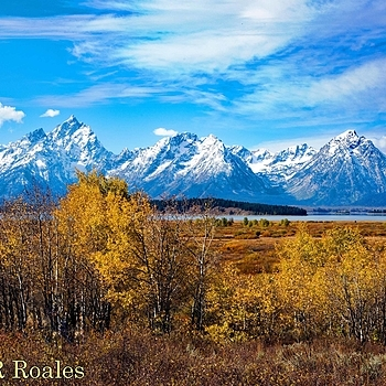 Yellowstone NP Aspens in fall | NIKON 24-120MM F/3.5-5.6G AF-S VR <br> Click image for more details, Click <b>X</b> on top right of image to close