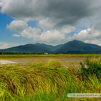 Paddy field | NIKON 24-70MM F/2.8G ED AF-S N <br> Click image for more details, Click <b>X</b> on top right of image to close