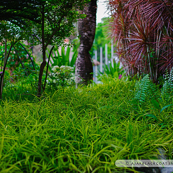 Airport garden | ZEISS ZF-II PLANAR T* F1.4 50MM <br> Click image for more details, Click <b>X</b> on top right of image to close