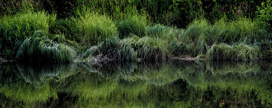 shore grass | NIKON 180MM F/2.8 ED <br> Click image for more details, Click <b>X</b> on top right of image to close