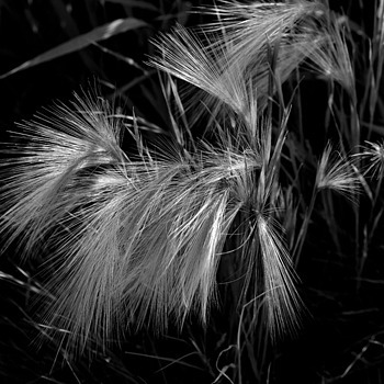 Wild grass | VIVITAR SERIES 1 90MM 1:25 MACRO