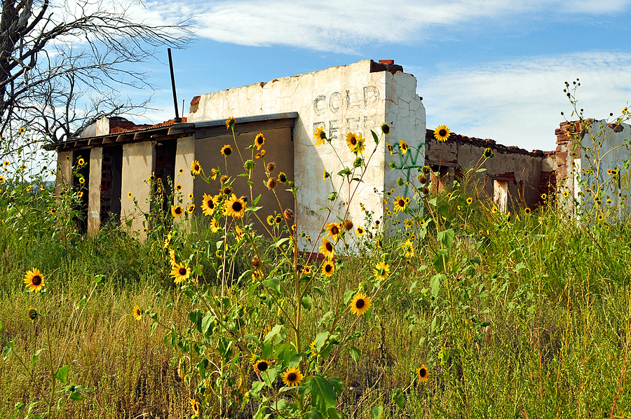 NM Sunflowers at the Ruins | NIKON 18-55MM F/3.5-5.6G ED AF-S DX <br> Click image for more details, Click <b>X</b> on top right of image to close