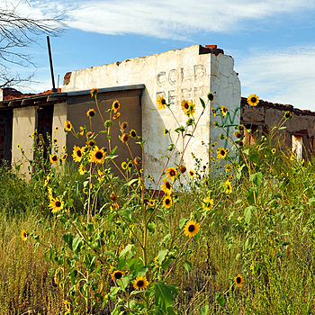 NM Sunflowers at the Ruins | NIKON 18-55MM F/3.5-5.6G ED AF-S DX