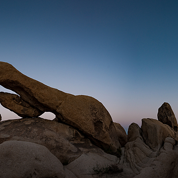 Joshua Tree andd the Elephant  Arch