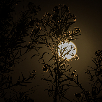 Alt Supermoon, LA | LENS MODEL NOT SET <br> Click image for more details, Click <b>X</b> on top right of image to close