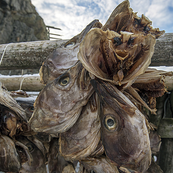 Cod heads drying | AF-S NIKKOR 16-35MM F/4G ED VR <br> Click image for more details, Click <b>X</b> on top right of image to close