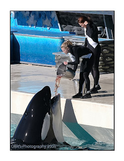 A Trainer Feeding An Orca At Sea World | NIKON 70-300MM F/4.5-5.6G IF-ED AF-S VR <br> Click image for more details, Click <b>X</b> on top right of image to close