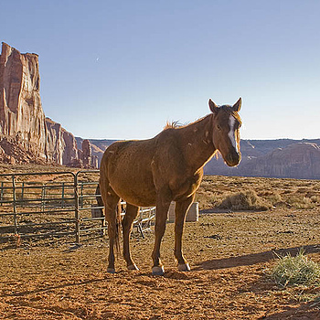 Monument Valley Horse | NIKON 28-200MM F/3.5-5.6D IF AF
