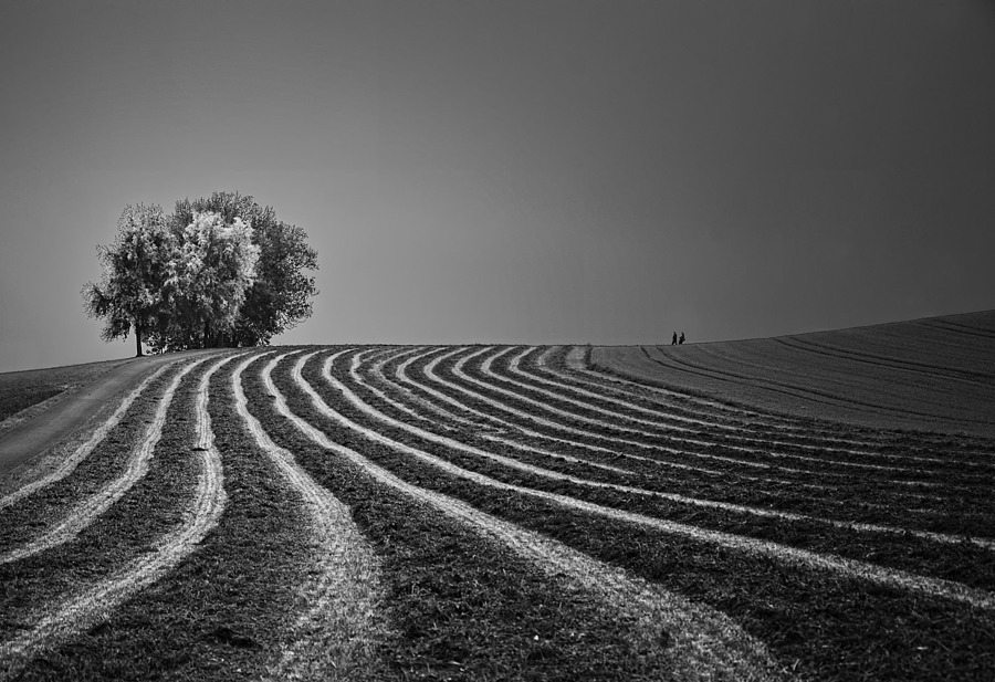 On the Lines... | NIKON 18-105MM F/3.5-5.6G ED-IF AF-S VR DX <br> Click image for more details, Click <b>X</b> on top right of image to close